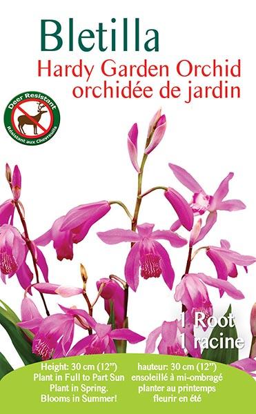 Bletilla Hardy Garden Orchid