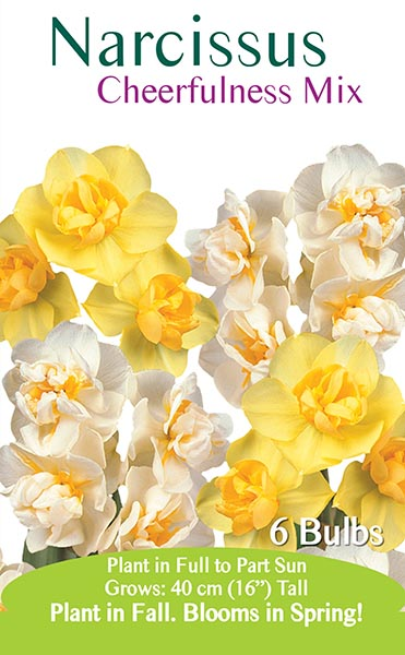 Narcissus Cheerfulness Mix