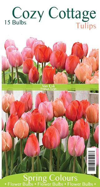 Cozy Cottal Tulip Blend