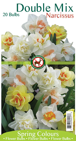 Double Mix Narcissus