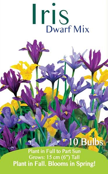 Iris Dwarf Mix