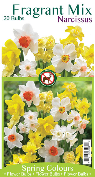 Fragrant MIx Narcissus