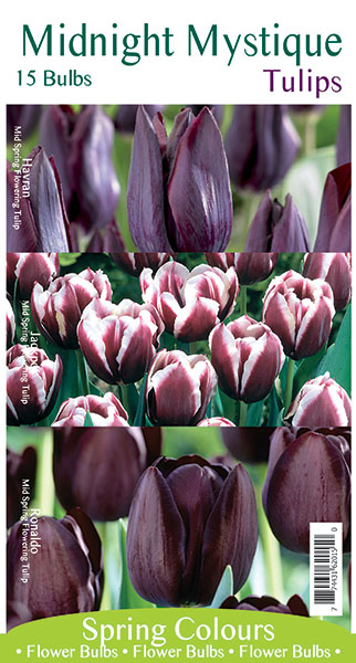 Midnight Mystique Tulips