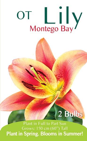 OT Lily Montego Bay