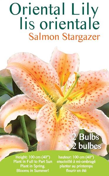 Oriental Lily Salmon Stargazer