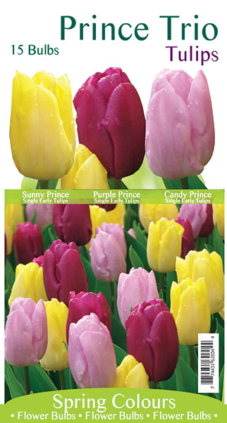 Prince Tulip Blend