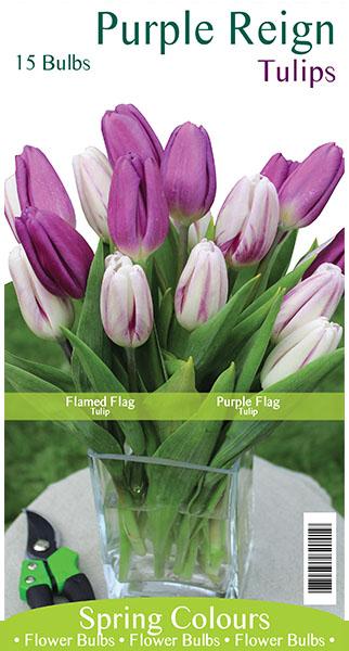 Purple Reign Tulips