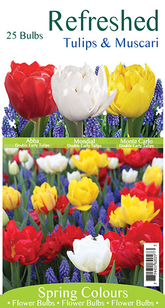 Refreshed Tulips & Muscari