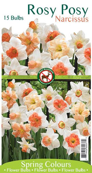 Rosy Posy Narcissus