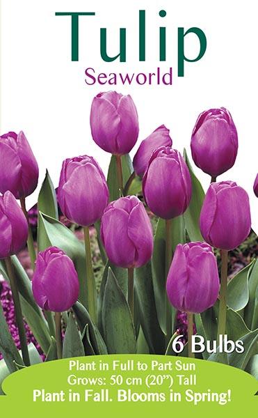 Seaworld Tulip