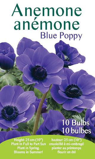 Anemone - Blue Poppy