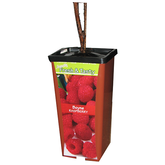 Chain Fruit Pot Raspberry - Front