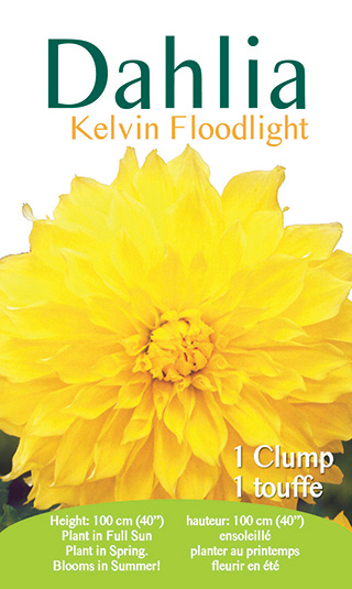 Dahlia - Kelvin Floodlight