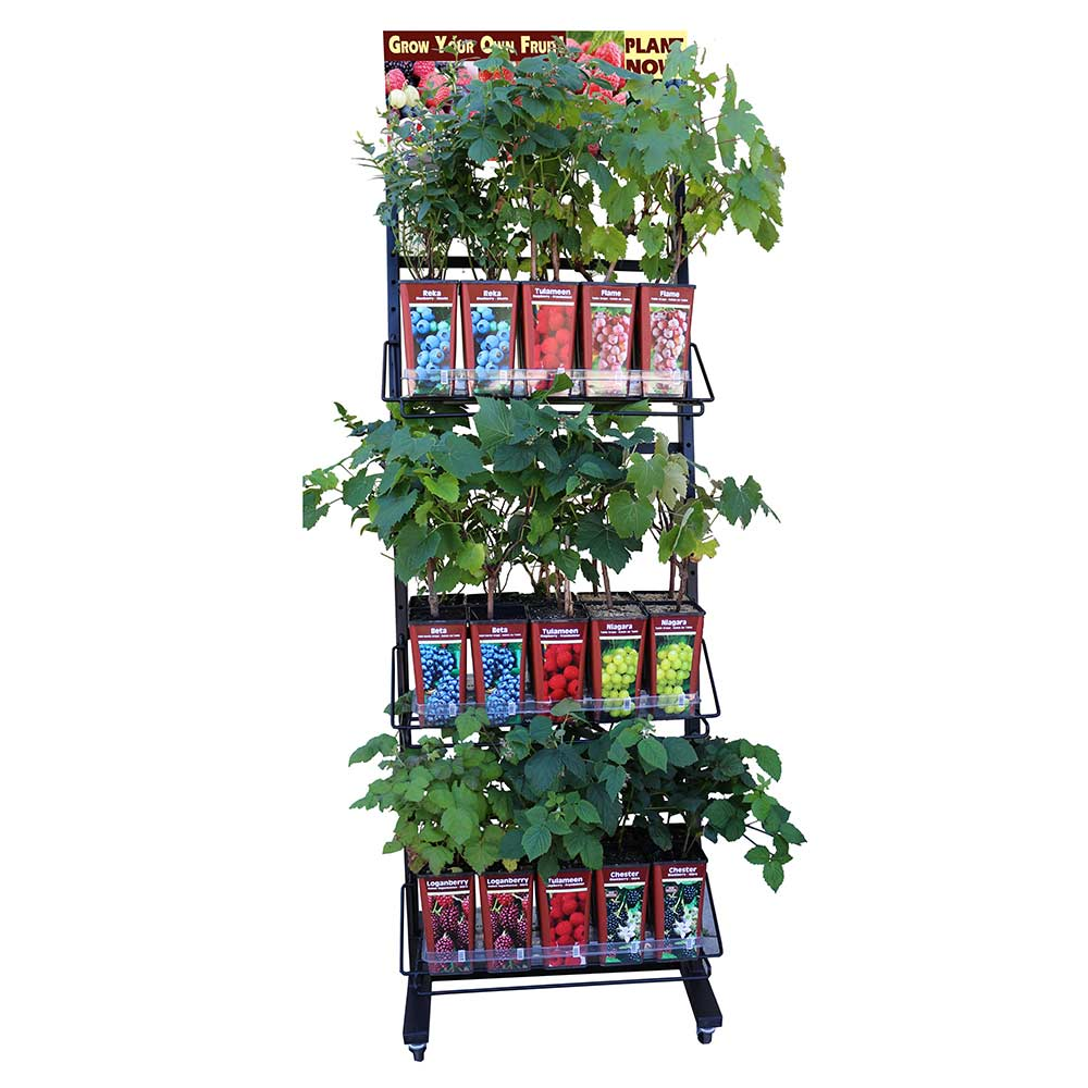 Fruit Rack - Growing