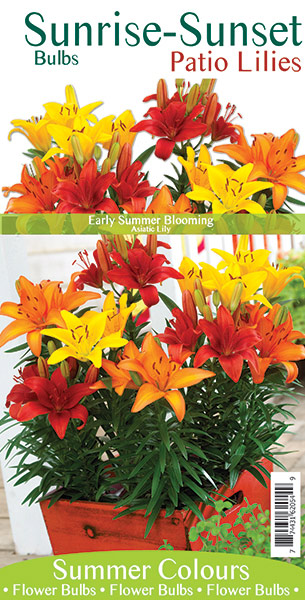 Sunrise-Sunset Patio Lilies