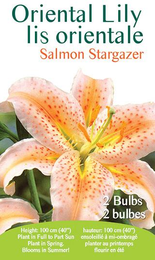 Oriental Lily - Salmon Stargazer