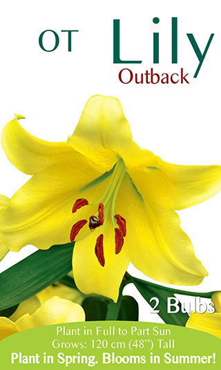 OT Lily Outback